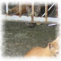 thumbnail-mini-家の猫